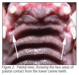 Interceptive Orthodontics for dogs - vet dentistry