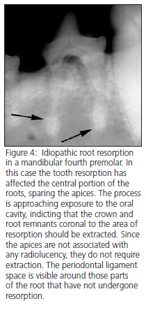Dog tooth resporption treatment radiograph