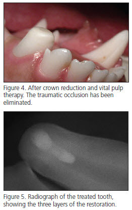 Canine occlusion eliminated with veterinary dentistry treatment