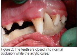 Segmental Mandibulectomy - Veterinary Dentistry