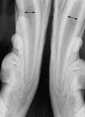 wide root canals in young canine patients