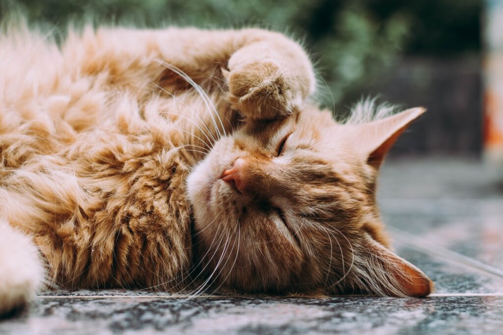 How Poor Cat Dental Care Can Lead To Health Risks