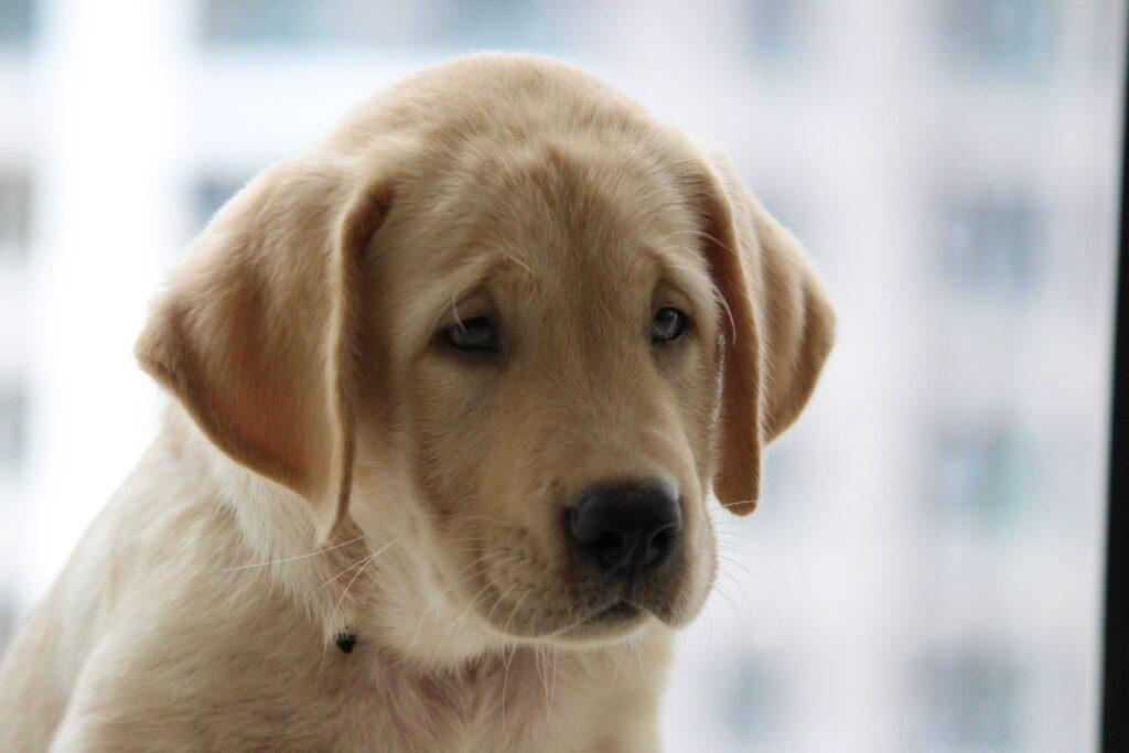 Healthy vs. Unhealthy Gums in Dogs