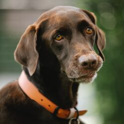 malocclusions in pets
