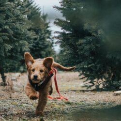oronasal fistula in dogs